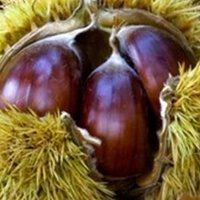 Our special Chestnuts